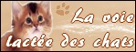 http://voie-lactee-des-chats.blogy.fr